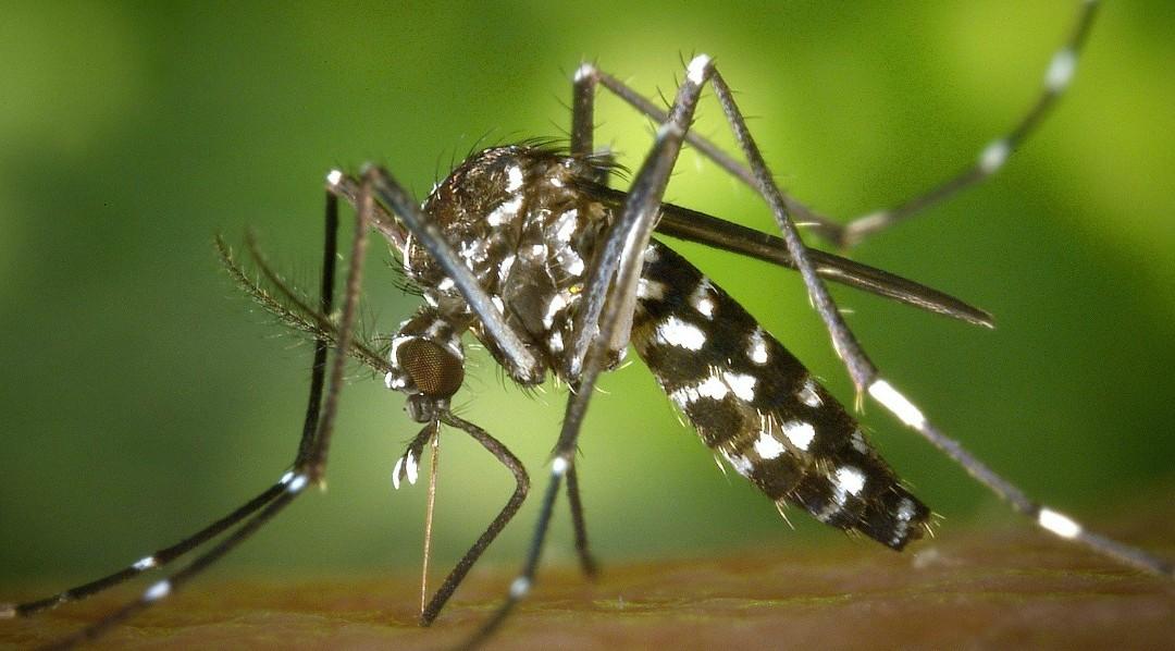 Zika-Virus: Glossar zur Terminologie Deutsch-Englisch