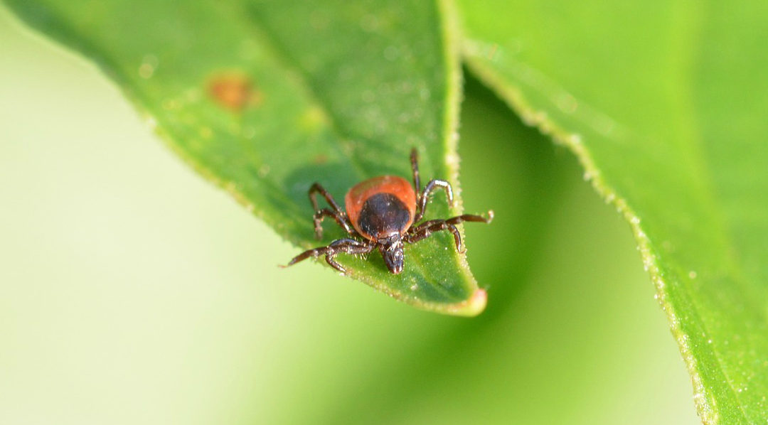 Tick-borne diseases: a glossary of terms in German and English